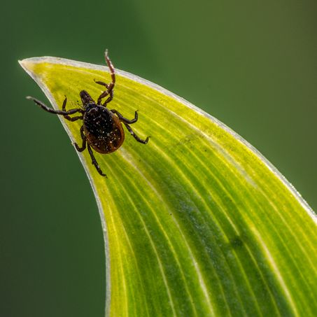 9 Tick-Borne Diseases That Can Make You Seriously Sick—and How to Spot Them