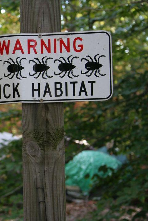 Tick Habitat - Hazards of Camping