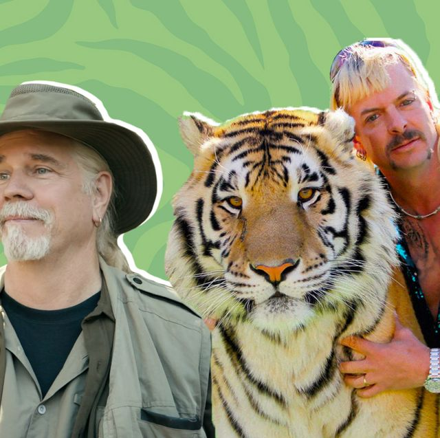 Tiger, Bengal tiger, Felidae, Wildlife, Siberian tiger, Big cats, Carnivore, Terrestrial animal, Adaptation, Organism,