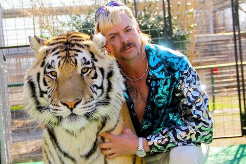Tiger, Bengal tiger, Wildlife, Felidae, Siberian tiger, Big cats, Zoo, Carnivore, Organism, Eye,