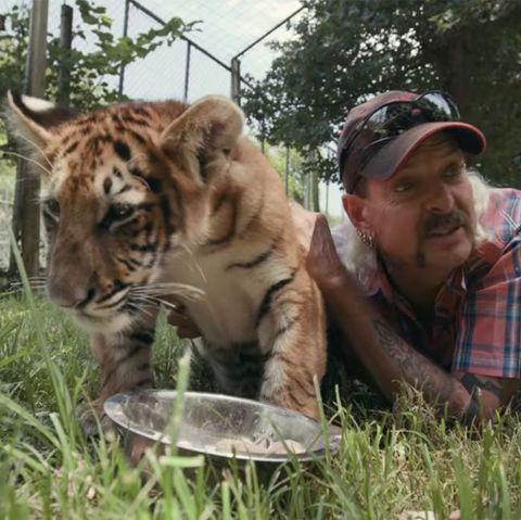 Tiger, Mammal, Vertebrate, Wildlife, Bengal tiger, Terrestrial animal, Felidae, Siberian tiger, Big cats, Carnivore,