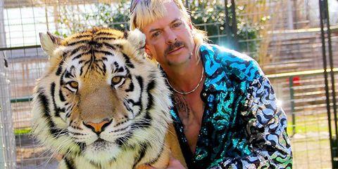 Tiger, Bengal tiger, Wildlife, Felidae, Siberian tiger, Big cats, Carnivore, Eye, Terrestrial animal, Snout,