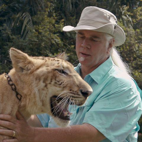 Mammal, Vertebrate, Felidae, Wildlife, Big cats, Liger, Lion, Carnivore, Wildlife biologist, Zookeeper,