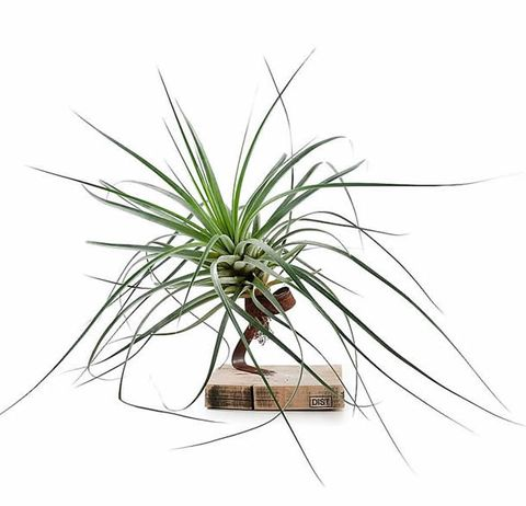 Dist airplants