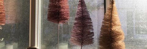 Tiny Bottlebrush Christmas Trees Lined up in a Row on a Window Ledge