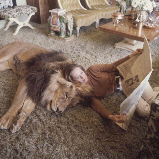 tippi hedren lion