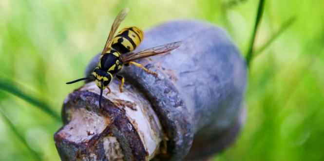 beste-tips-wespen-op-afstand-houden