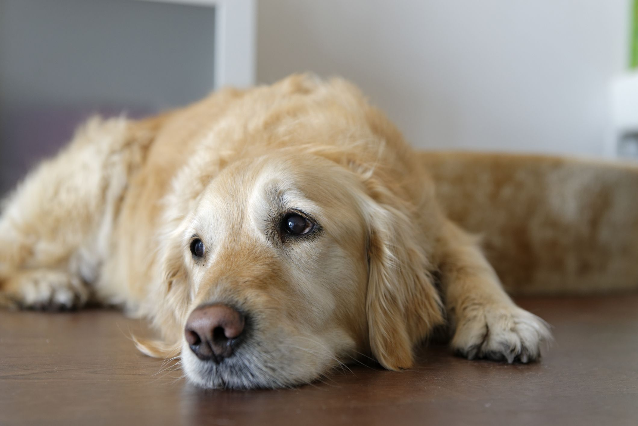 7 beautiful ways to remember your dog after they have died