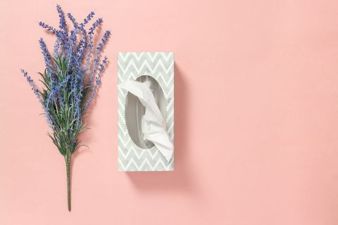 Tissue box and blue lavender on pink background