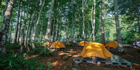 Tree, Woodland, Natural environment, Forest, Wilderness, Biome, Nature reserve, Camping, Tent, Old-growth forest,