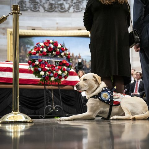 What Sully, George H.W.'s Service Dog, Is Up to Now