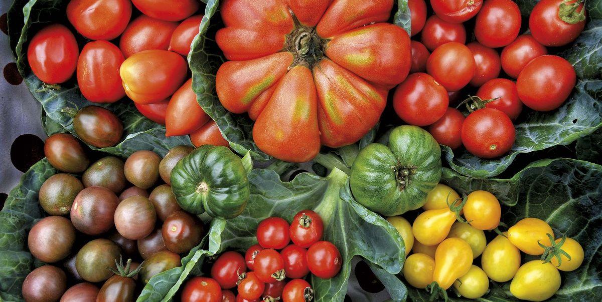 ¡Aquí hay mucho tomate! 🍅