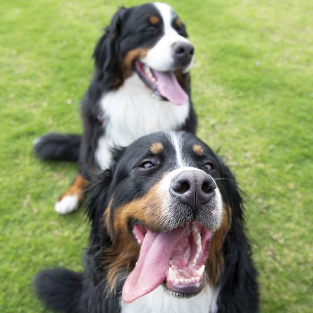 16 words dogs love the most, according to a new study