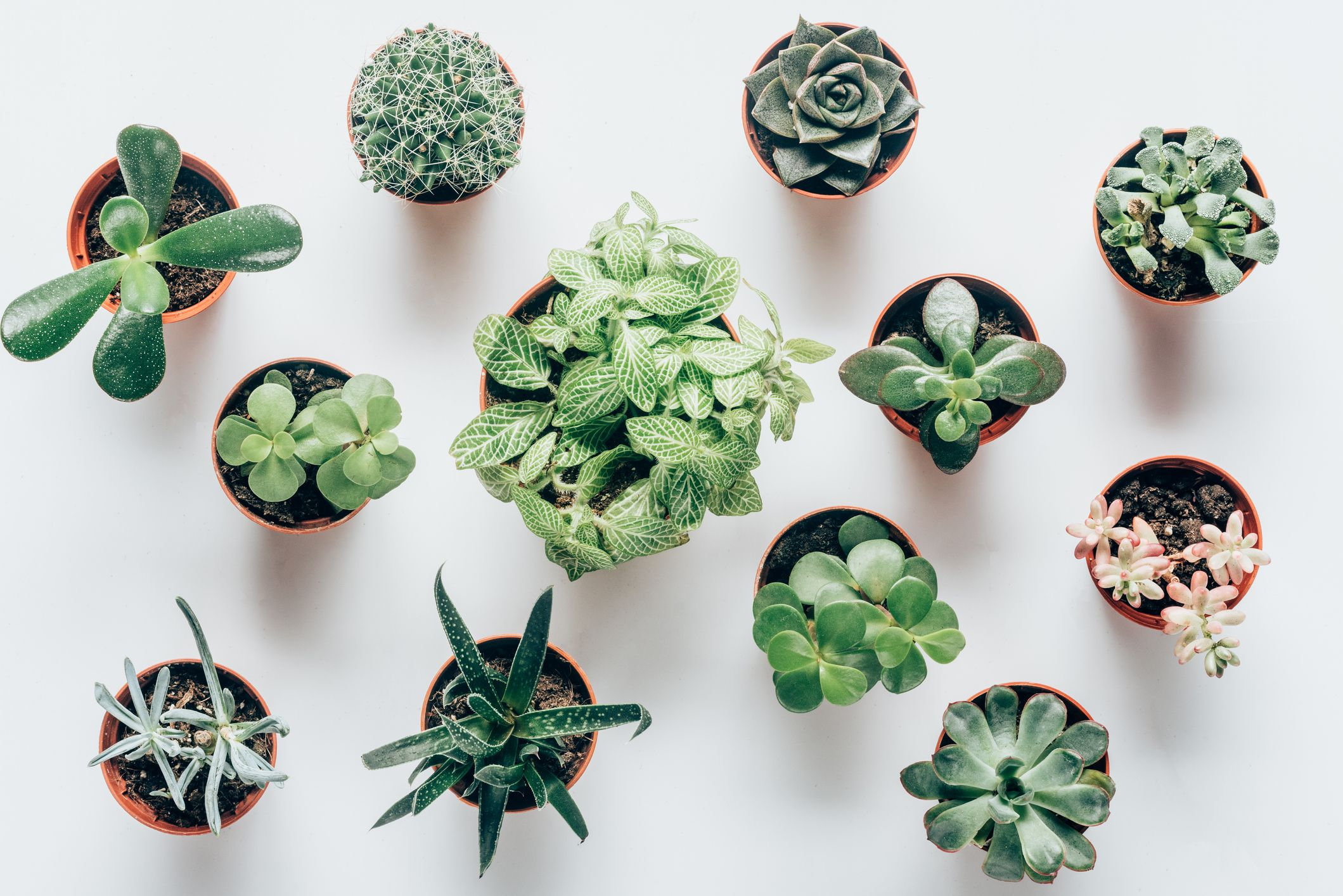 10 Amazing Types of Succulents Every Plant Lover Needs to Know