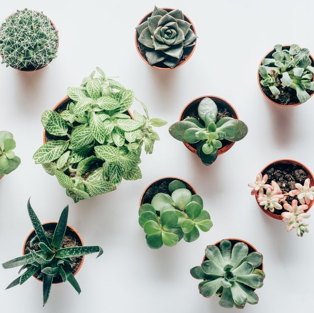 10 Types Of Succulents You Need To Know Trendy And Colorful
