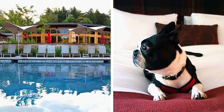 Hotels In Santa Fe Nm That Allow Pets