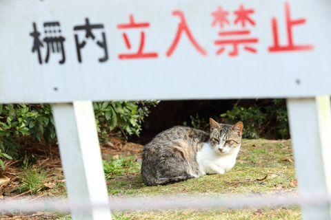 京都 ネコ 野良猫