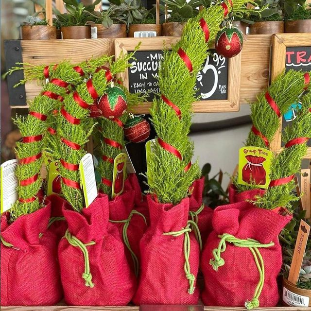 trader joe's grinch inspired christmas tree plant
