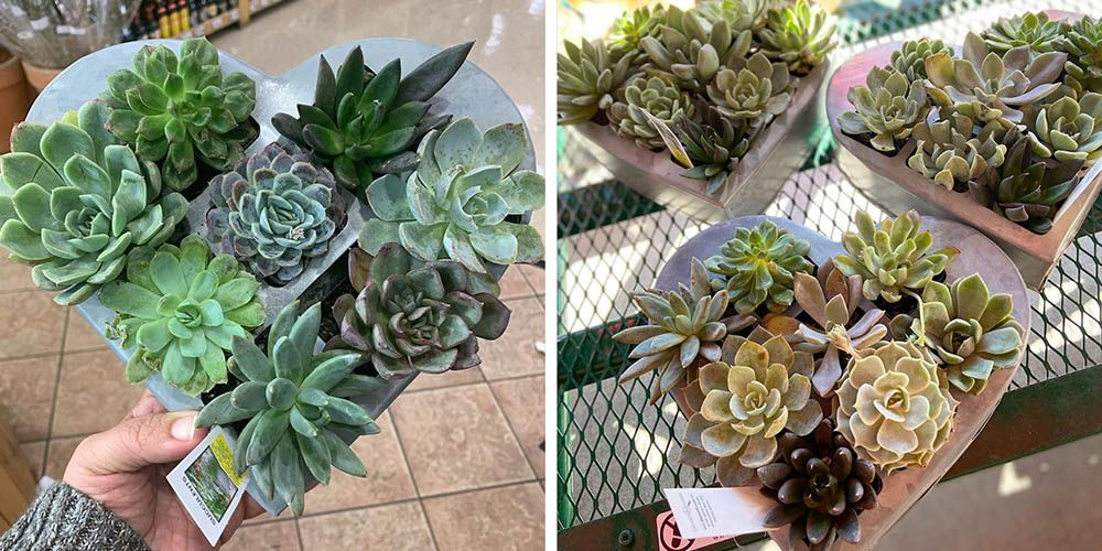 Trader Joe's Heart-Shaped Succulent Planters Are Flying Off of Shelves