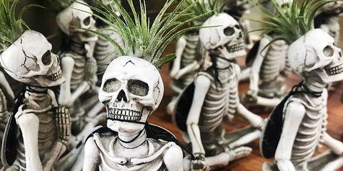 Skeleton, Skull, Bone, Plant, Technology,