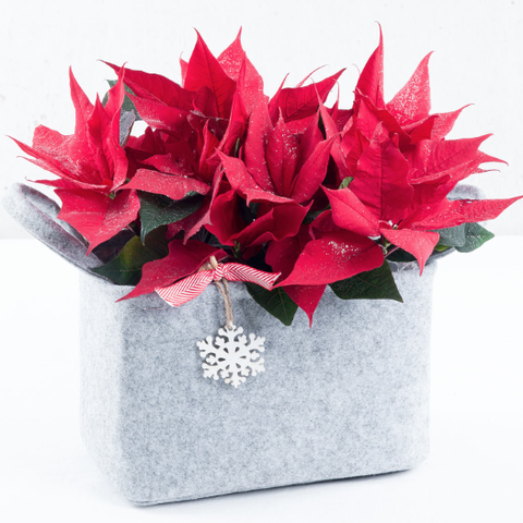 Traditional Poinsettia Felt Trug