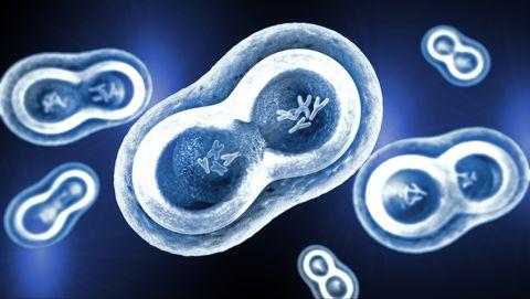 Wat doen chromosomen