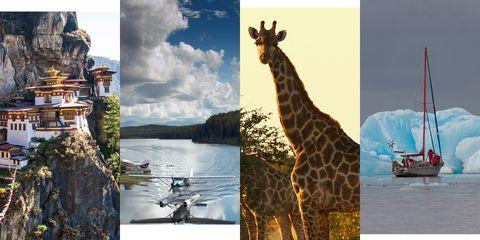 Giraffe, Giraffidae, Wildlife, Adaptation, Terrestrial animal, Organism, Tourism, Travel, Stock photography, Collage,
