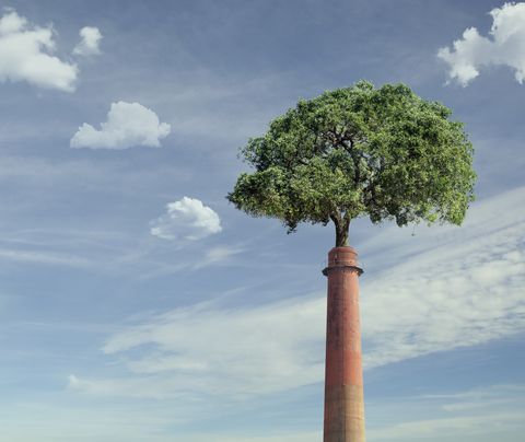 tree growing from smoke stack