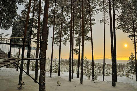 Tree hotel Swedish Lapland