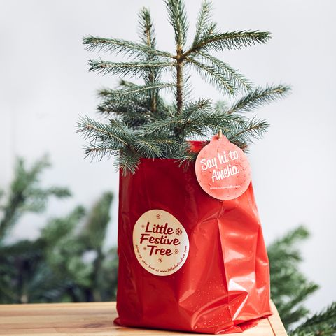 Rent a Christmas tree - How the sustainable scheme works