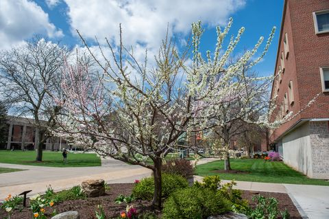 Tree, Spring, Residential area, Daytime, Neighbourhood, Blossom, Plant, Woody plant, Public space, Flower,