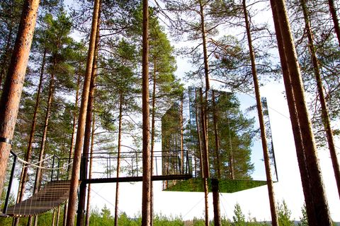 Tree, Nature, Forest, Natural environment, Grove, Tropical and subtropical coniferous forests, Woodland, Woody plant, Northern hardwood forest, Spruce-fir forest,