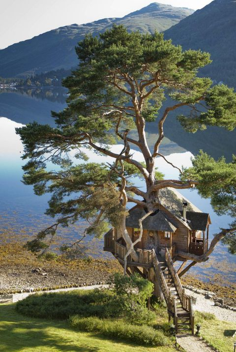 31 Amazing Treehouses You Can Rent In 2020 Best Tree