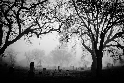 Trees At Cemetery Against Sky During Foggy Weather