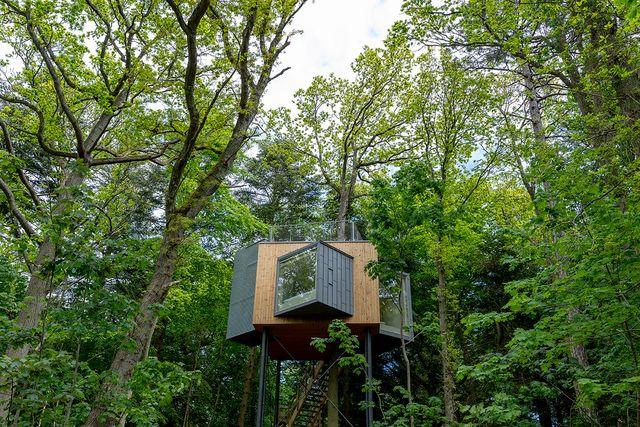 hotel lovtag, un hotel con cabañas en las copas de los árboles en un bosque en dinamarca