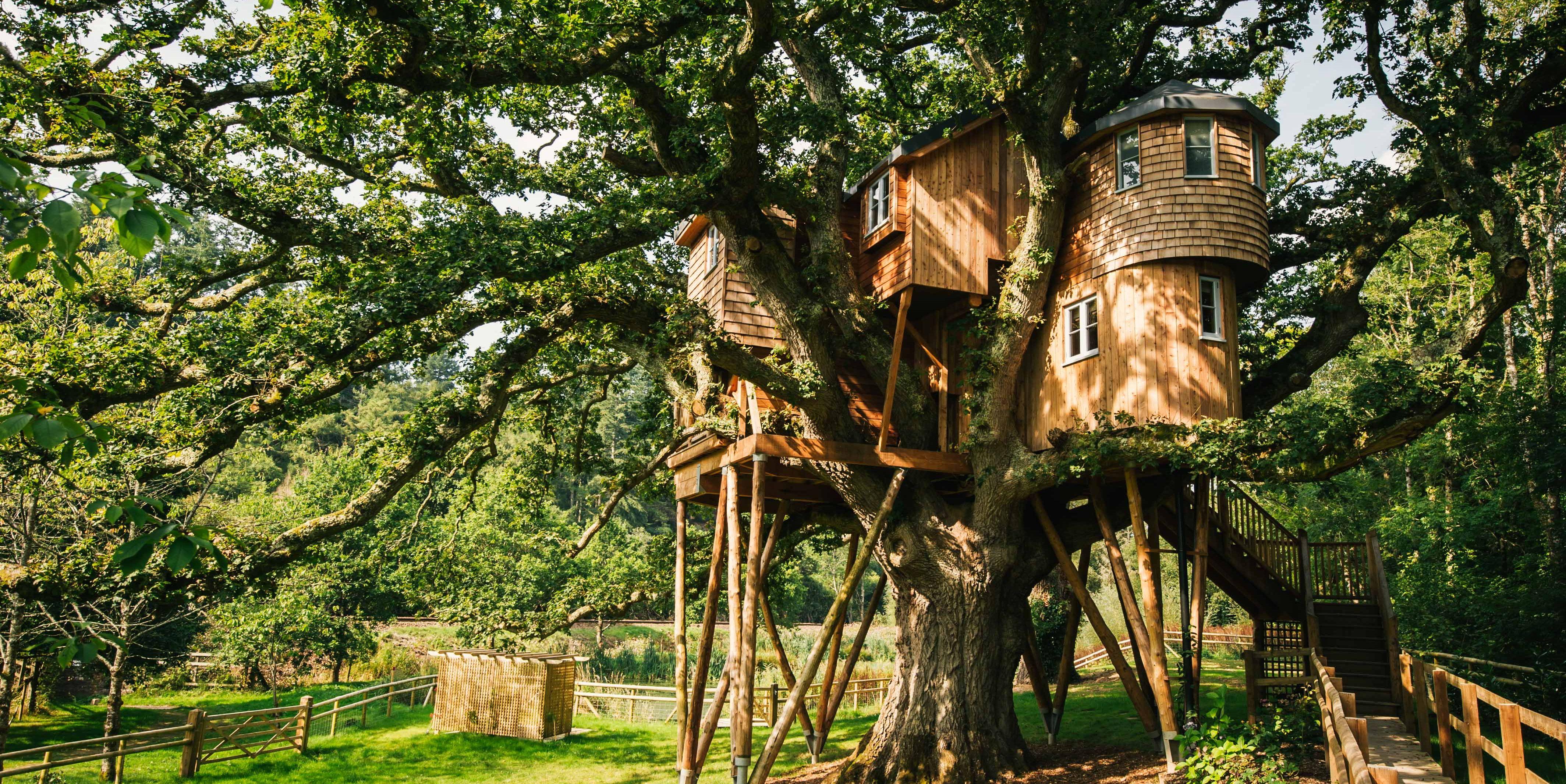Treetops Treehouse - Devon - exterior - Canopy & Stars