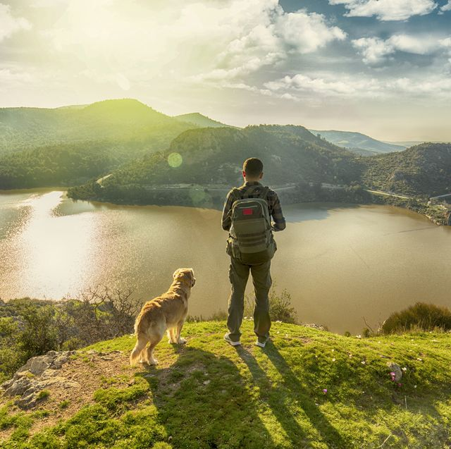 8 dog travel trends for 2021