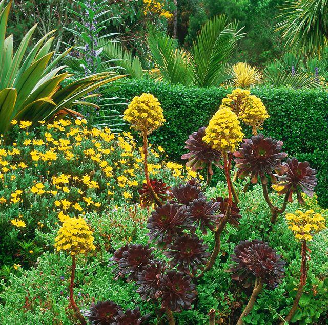tresco abbey best english gardens