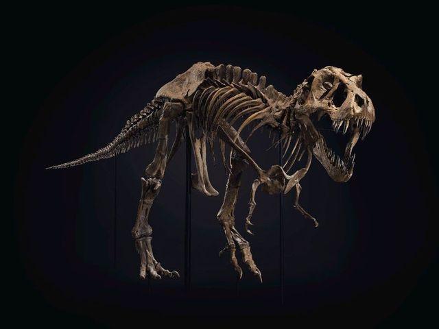stan the t rex skeleton