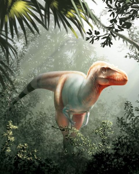 Dinosaur, Velociraptor, Tyrannosaurus, Organism, Wildlife,