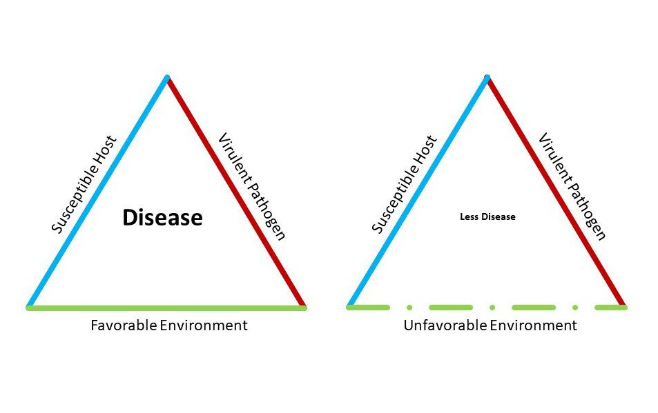 COVID-19 Coronavirus - Flattening the Curve | Disease Triangle