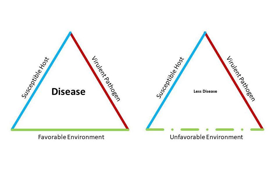 COVID-19 Coronavirus - Flattening the Curve | Disease Triangle