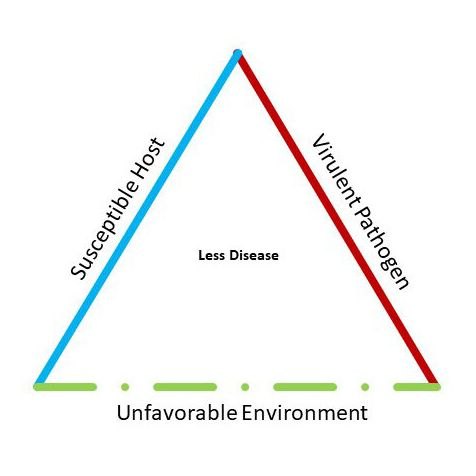 """the """"disease triangle"""" shows how an epidemic arises from the interaction of a susceptible host, a virulent pathogen and a hospitable environment"""