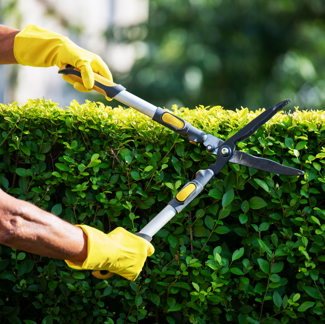 trimming hedges to get rid of ticks