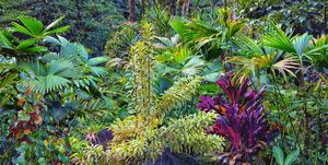 Tropical garden in Costa Rica