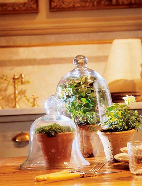 Flowerpot, Plant, Herb, Still life, Houseplant, Glass, Flower, Floral design,