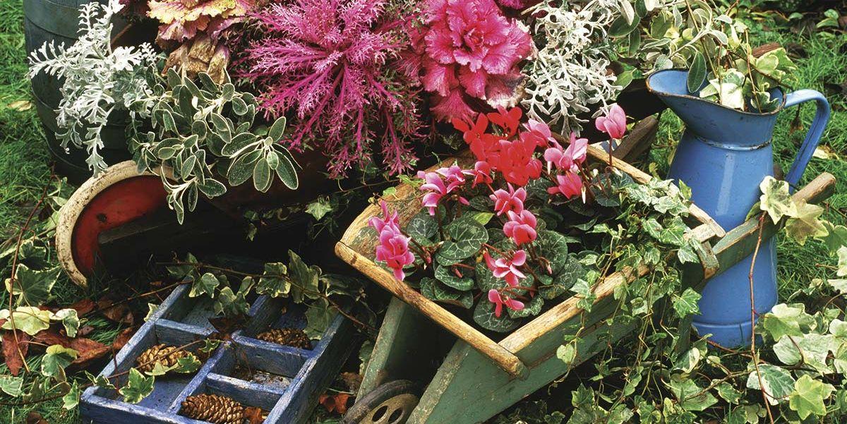 Jardinería de invierno