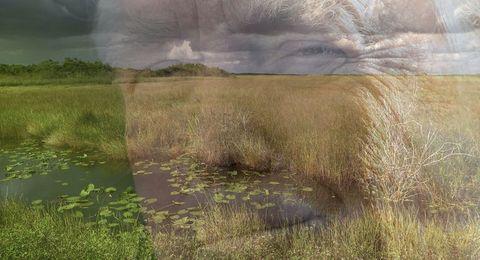 Grassland, Natural landscape, Natural environment, Pasture, Prairie, Grass, Meadow, Fen, Plain, Wetland,