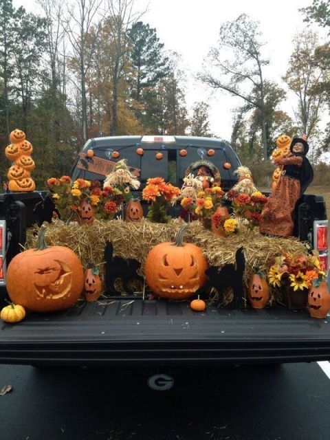 pumpkin, trick or treat, calabaza, orange, winter squash, jack o' lantern, gourd, cucurbita, tree, plant,