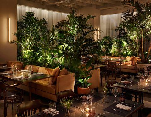 Interior design, Lighting, Room, Houseplant, Tree, Building, Lobby, Restaurant, Living room, Architecture,